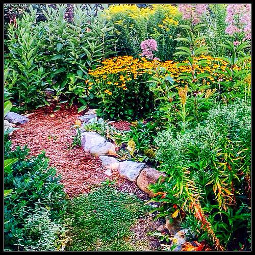 Oakland School Butterfly Garden