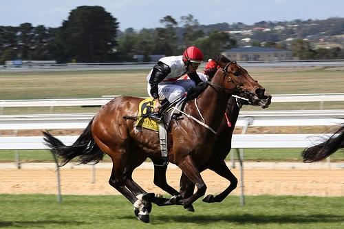 Horse Racing at Mornington