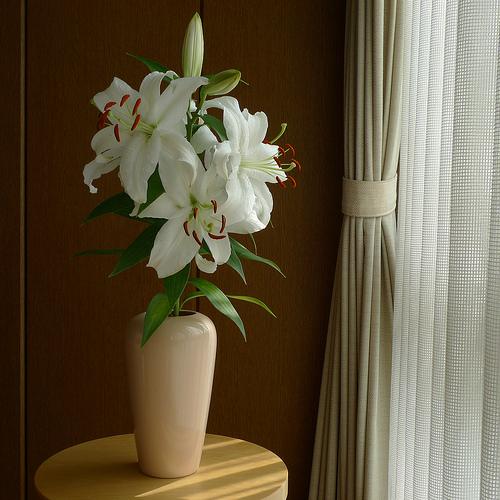Siberian lily 2010/08/24